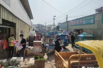网店售卖假苗木生意P出自创新品种野蔷薇苗当月季卖